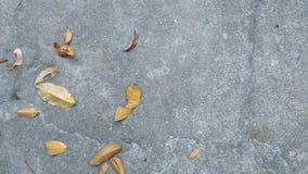 Hojas en un piso concreto Foto de archivo