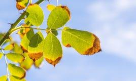 Hojas en una rama opaca en la luz del sol imágenes de archivo libres de regalías