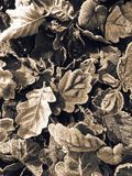 Hojas escarchadas que mienten en la tierra Fotos de archivo
