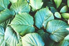 Hojas esmeralda verde oscuro, fondo natural abstracto, wi de la imagen imagen de archivo libre de regalías