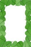 Hojas esqueléticas en el fondo blanco - marco Imagenes de archivo