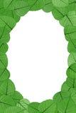 Hojas esqueléticas en el fondo blanco - marco Imagen de archivo libre de regalías