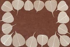 Hojas esqueléticas sobre el papel hecho a mano marrón Foto de archivo libre de regalías