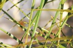 Hojas estrechas, acentuadas en el jardín fotografía de archivo libre de regalías