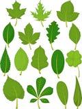 Hojas fijadas - hojas del verde Fotografía de archivo libre de regalías