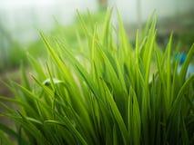 Hojas finas del verde en luz del sol Imagenes de archivo
