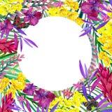 Hojas, flores y mariposa tropicales Imágenes de archivo libres de regalías
