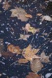 Hojas flotantes Foto de archivo