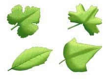Hojas frescas de la pintura verde de la hoja ilustración del vector