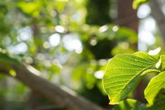 Hojas frescas de la primavera del verde vivo foto de archivo
