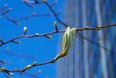 Hojas frescas de la primavera en la ciudad Imagen de archivo
