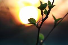 Hojas frescas de la primavera en un árbol Fotografía de archivo libre de regalías