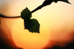 Hojas frescas de la primavera en un árbol Imagen de archivo libre de regalías