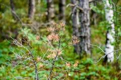 hojas frescas de la primavera verde vibrante del árbol en primavera Fotografía de archivo libre de regalías