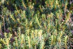 hojas frescas de la primavera verde vibrante del árbol en primavera Imagen de archivo