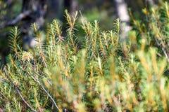 hojas frescas de la primavera verde vibrante del árbol en primavera Foto de archivo