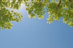 Hojas frescas del verde Imagen de archivo
