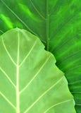 Hojas frescas del verde imagenes de archivo