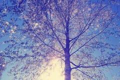 hojas frescas jovenes de la corona del abedul en el cielo azul el sol ilumina Imagen de archivo