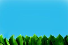 Hojas frescas verdes Imagenes de archivo