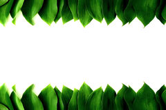 Hojas frescas verdes Foto de archivo libre de regalías