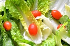 Hojas frescas verdes de la ensalada con el tomate Foto de archivo libre de regalías
