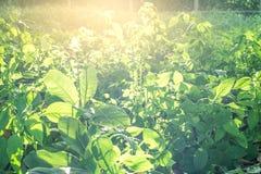 Hojas frescas y verdes Foto de archivo libre de regalías