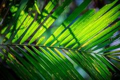 Hojas grandes del árbol verde con luz del sol fotografía de archivo libre de regalías