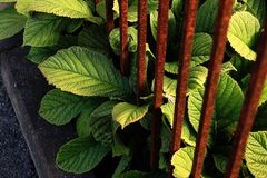 Hojas grandes verdes con Rusty Bars imágenes de archivo libres de regalías