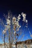 Hojas heladas en el arbusto Imagen de archivo libre de regalías