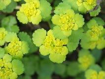 Hojas hermosas del amarillo Foto de archivo
