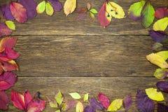 Hojas hermosas en el fondo de madera del vintage, diseño de la frontera tono del color del vintage - concepto de hojas de otoño e Foto de archivo libre de regalías