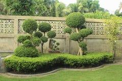 Hojas hermosas en el jardín, usado para hacer publicidad de diseño, hom Imágenes de archivo libres de regalías