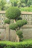 Hojas hermosas en el jardín, usado para hacer publicidad de diseño, hom Imagenes de archivo
