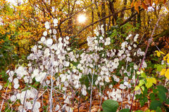 Hojas hermosas en un bosque encantado Imágenes de archivo libres de regalías