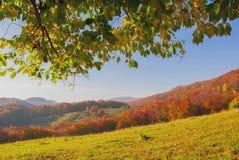 Hojas hermosas verdes Fotos de archivo libres de regalías