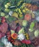 Hojas, hoja, flores, hierba bajo el hielo Imágenes de archivo libres de regalías