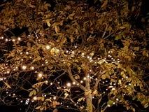 Hojas iluminadas Imagen de archivo libre de regalías