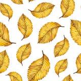 Hojas inconsútiles del amarillo del otoño del modelo de la acuarela del olmo Fotografía de archivo