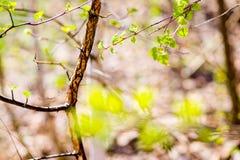 Hojas jovenes de una macro del árbol Imagen de archivo