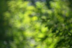 Hojas jugosas del verde de Bokeh fotografía de archivo libre de regalías
