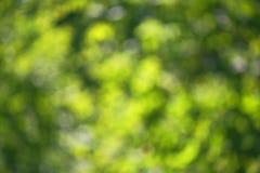 Hojas jugosas del verde de Bokeh imagenes de archivo