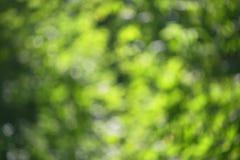 Hojas jugosas del verde de Bokeh fotos de archivo