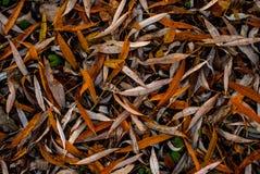 Hojas largas de la naranja dispersadas uniformemente en la tierra Fotografía de archivo libre de regalías