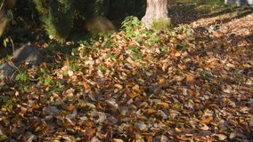 hojas marchitadas dow descendente almacen de video