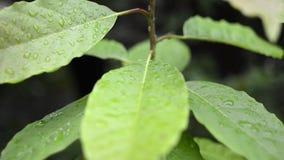 Hojas mojadas de la planta almacen de metraje de vídeo