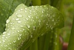 Hojas mojadas del verde en un jardín Fotografía de archivo libre de regalías