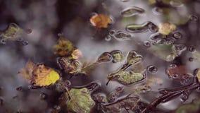 Hojas mojadas en bosque del otoño después de la precipitación El llover sobre las hojas rojas y amarillas del árbol en caída lluv metrajes