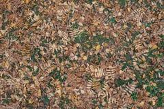 Hojas muertas del serbal y del abedul en la hierba Imágenes de archivo libres de regalías