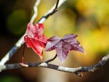 Hojas multicoloras fotografía de archivo libre de regalías